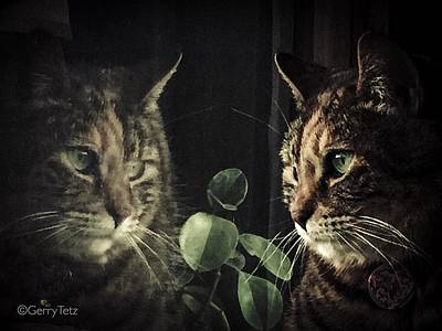 Photograph - Cat Reflecting by Gerry Tetz