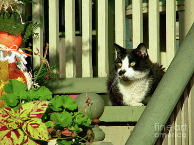 Photograph - Cat Relaxing by Mark Gilman
