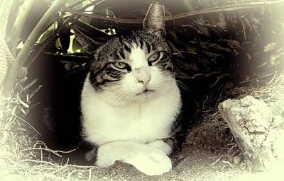 Mixed Media - Cat Relaxing by Pamela Walton