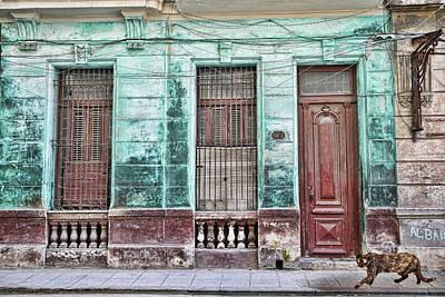 Photograph - Cat Row by Mary Buck
