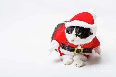 Photograph - Cat Santa Christmas by Benny Marty