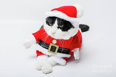 Photograph - Cat Santa Claus by Benny Marty