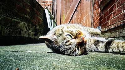 Photograph - Cat Selfie by Pedro Fernandez