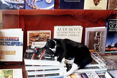 Photograph - Cat Sleeping In Book Store Window by Jim Corwin