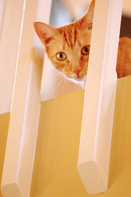 Photograph - Cat Spy by Jill Reger