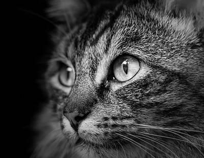 Cat Stare Bw Art Print by Rick Deacon