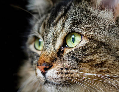 Cat Stare Art Print by Rick Deacon