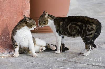 Cat Staring Contest Art Print