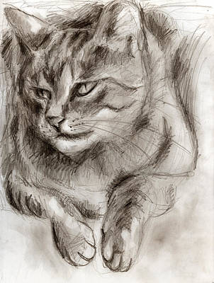 Cat Study Drawing No One Art Print