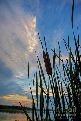 Photograph - Cat Tails At Sunset by David Arment