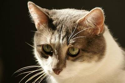 Photograph - Cat by Toni Berry