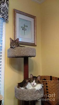 Photograph - Cat Tower by Stacy C Bottoms