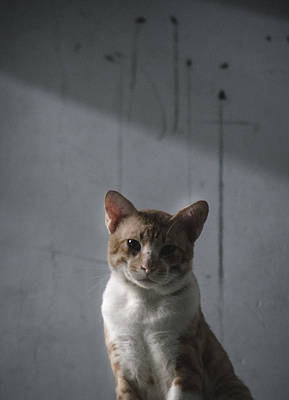 Photograph - cat by Tran Minh Quan