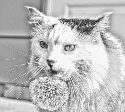 Photograph - Cat Versus Dandelion  by Aliceann Carlton