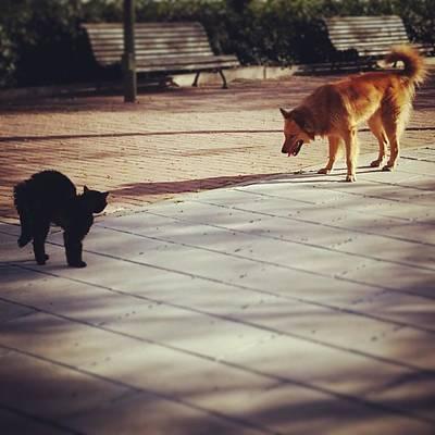 Cat Versus Dog Tension... #dog #animal Art Print
