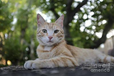 Rome Photograph - Cat Volterra Italy by Edward Fielding