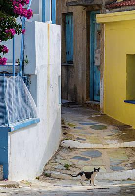 Skopelos Photograph - Cat Walking Across Path, Skopelos, Greece by Ben Asen