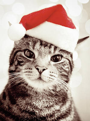 Cat Wearing Christmas Hat Art Print