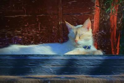 - Cat - Window by Nikolyn McDonald