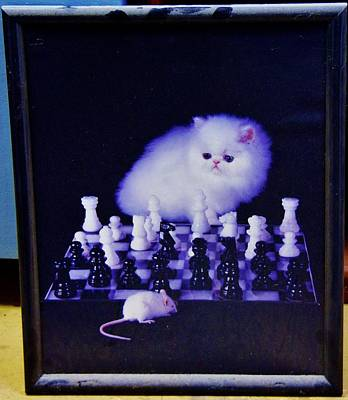 Photograph - Cat With Chess Board Anbd Mouse by Phyllis Spoor