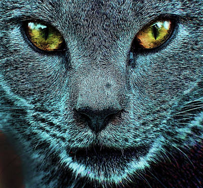 Photograph -  Cat With Golden Eyes by Cathy Harper