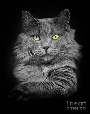 Photograph - Cat With The Golden Eyes by Mimi Ditchie