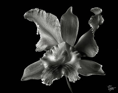 Photograph - Catalea Orchid In Black And White by Endre Balogh