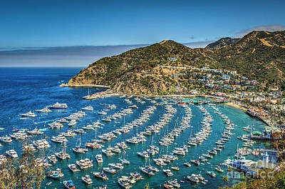 Photograph - Catalina Avalon Harbor Beautiful by David Zanzinger