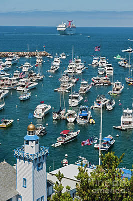 Photograph - Catalina Boats Moored Vertical by David Zanzinger
