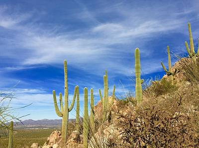Photograph - Catalina Cacti by Heidi Moss