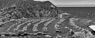 Photograph - Catalina Island Avalon B/w by David Zanzinger