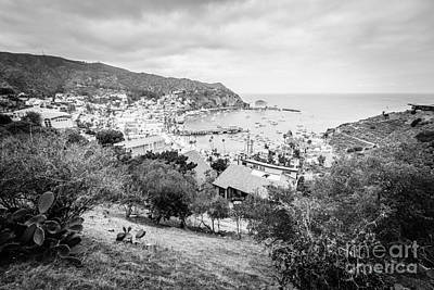 Catalina Island Avalon California Black And White Photo Art Print by Paul Velgos