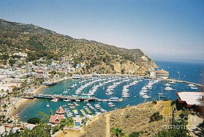 Photograph - Catalina Island by Pamela Walrath