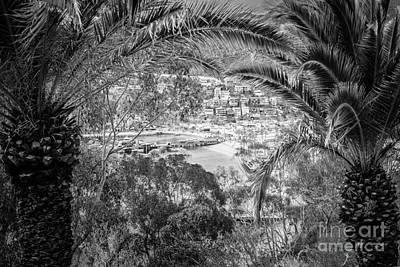 Catalina Island Through Palm Trees Print by Paul Velgos