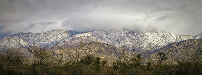 Photograph - Catalina's With Snow by Elaine Malott