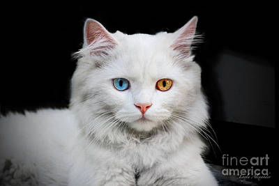 Layla Photograph - Catalisque Feline In White by Layla Alexander