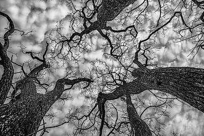 Photograph - Catalpa And Altostrato Q by Scott Cordell