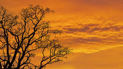 Catalpa Tree Sunrise Art Print