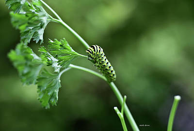 Photograph - Catapiller by Mark Alesse