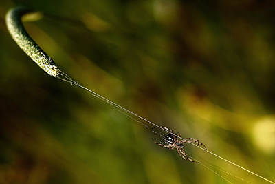 Spider Wall Art - Photograph - Catapult. by Antonio Grambone
