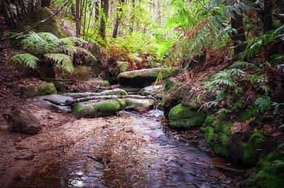 Photograph - Cataract Creek In Blue Mountain's Wilderness  by Daniela Constantinescu
