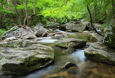 Photograph - Catawba River In Summer by Ranjay Mitra