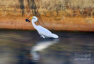 Water Droplets Sharon Johnstone - Catch of The Day by Arnie Goldstein