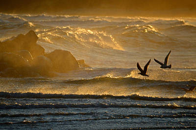 Photograph - Catch Of The Day - Cape Cod Bay by Dianne Cowen