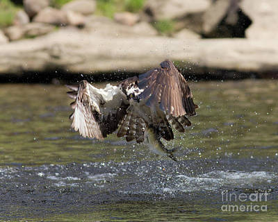 Photograph - Catch Of The Day by Ursula Lawrence