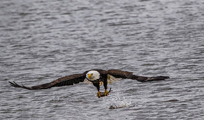 Photograph - Catching Fish by Ray Congrove