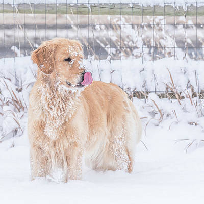 Photograph - Catching Snowflakes by Jennifer Grossnickle