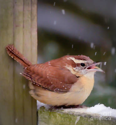Photograph - Catching Snowflakes by Kerri Farley