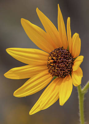 Photograph - Catching The Afternoon Sun by Teresa Wilson