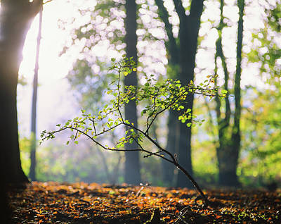 Photograph - Catching The Light On The Forest Floor by Will Gudgeon